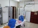 Clinica Fitossanitária